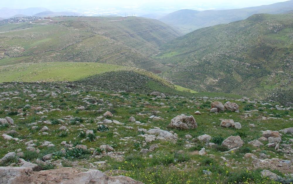 hills in palestine by eva the dragon